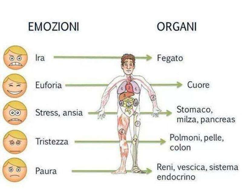 Dolori emozionali: che impatto fisiologico hanno s organi_e_emozioni_132_1.jpg (Art. corrente, Pag. 1, Foto ingrandimento)