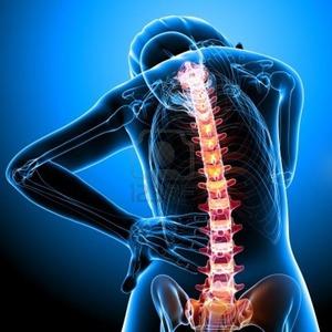 Riallineamento Divino della colonna vertebrale 13757923-anatomy-of-female-spine.jpg (Art. corrente, Pag. 1, Foto normale)