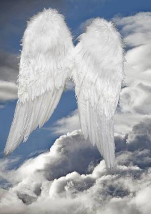 La Guarigione con l'amorevole energia degli Angeli ali_11_1.jpg (Art. corrente, Pag. 1, Foto normale)