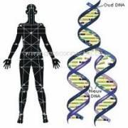 Reconnective Healing - Guarigione di Riconnessione corpo_e_dna_21_1.jpg (Art. corrente, Pag. 1, Foto normale)